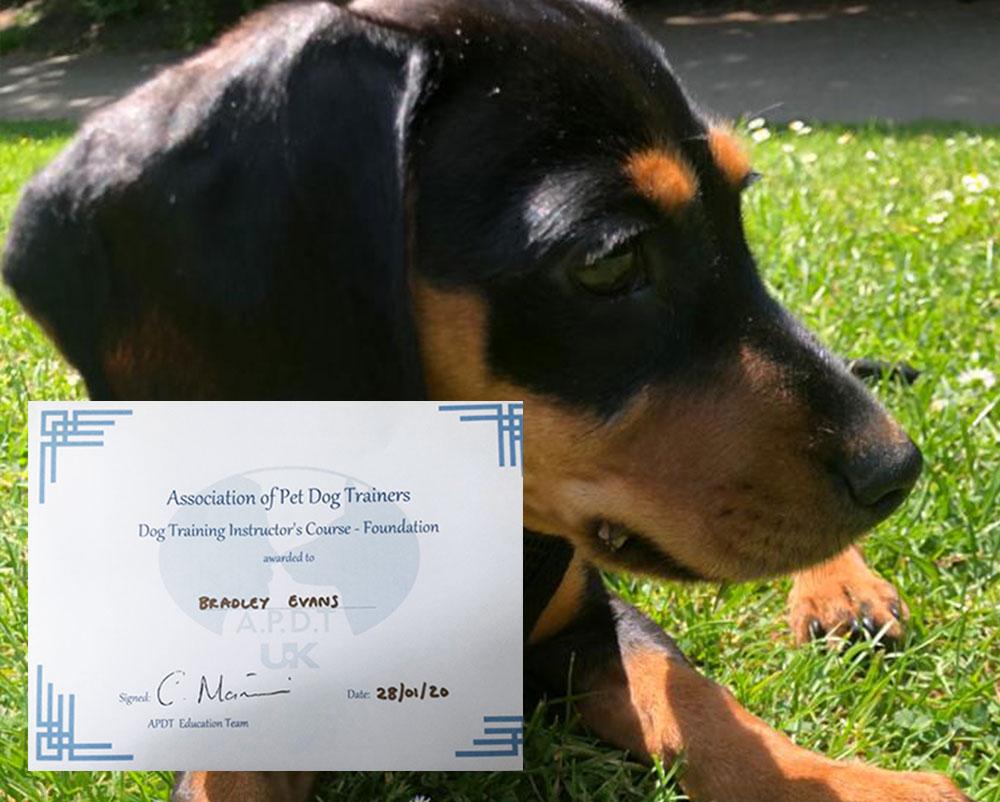 west london dog trainer
